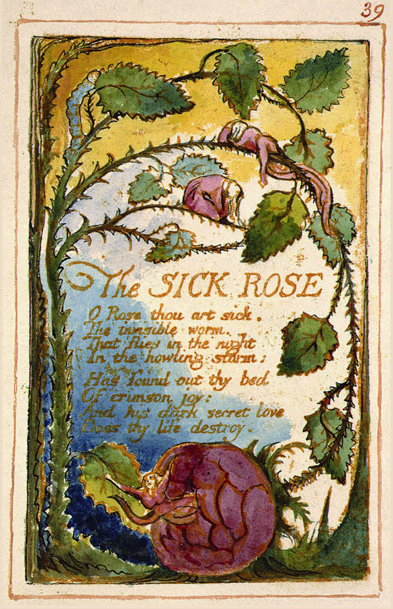Songs of innocence and of experience page 39 The Sick Rose Fitzwilliam copy